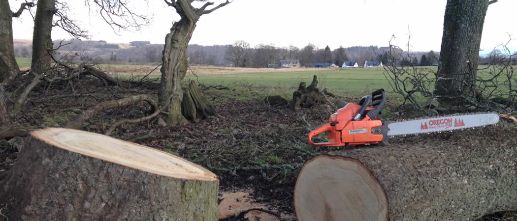 SS ARB Tree Solutions felled tree and chainsaw